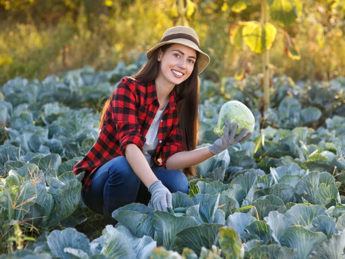 名古屋市中区_パーソナルジム_キャベツを栽培している女性